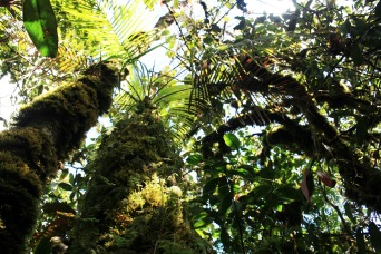 tree-ferns-and-moss